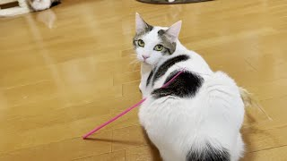 キョロキョロと探す鈍感な猫