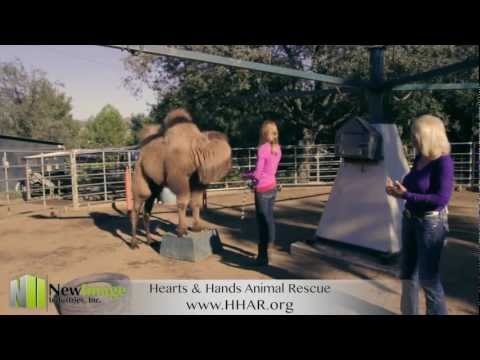 Ramona Animal Rescue Training