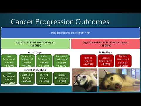 Epigenix Foundation: An Update on the Effects of Ketogenic Diets in Canine and Human Studies