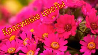 Самые красивые виды цветов