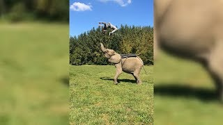 Man Does An Epic Back Flip With The Help Of An Elephant