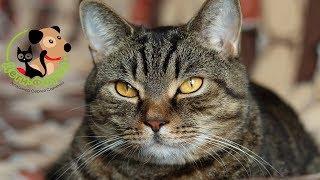 Почему выпадают усы у кошки?