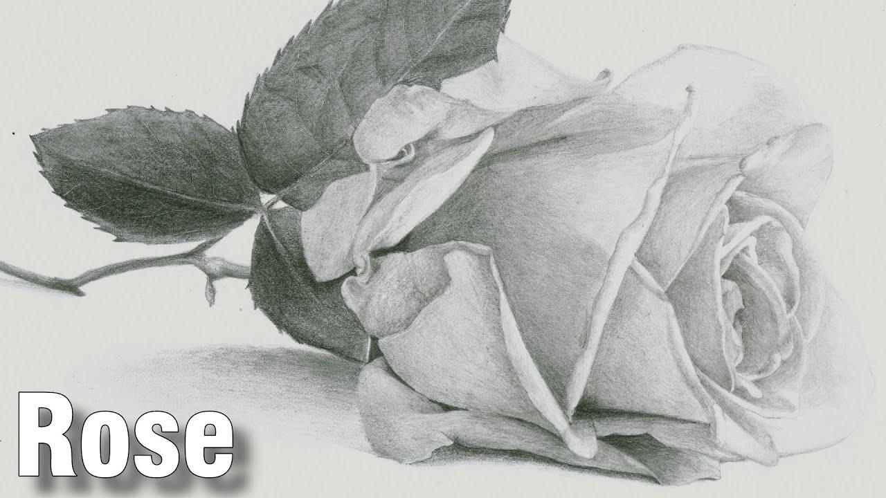 rose drawing tutorial 1 youtube