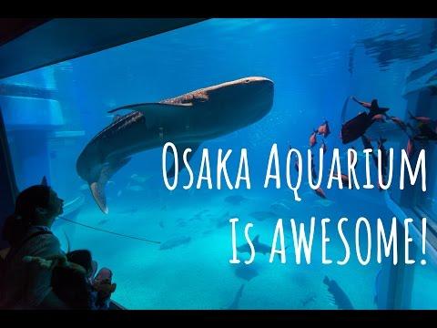 Osaka Aquarium is AMAZING!!!  beware of the sharks
