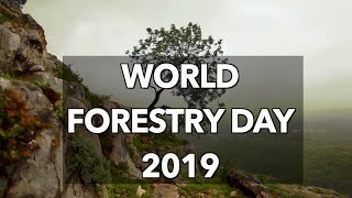 World Forestry Day 2019: Learning to love forests for a better future