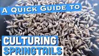 Culturing Springtails: A Quick Guide