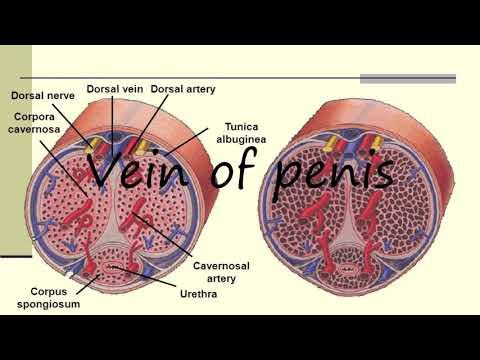 kaliteli sperm iзin ne yemeli