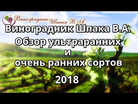 Обзор ультраранних и ранних сортов и гибридных форм винограда Шпака В.А. в 2018 году