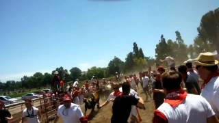 Bull Run - Running of the Bulls 2014, Alameda County Fair Grounds, California