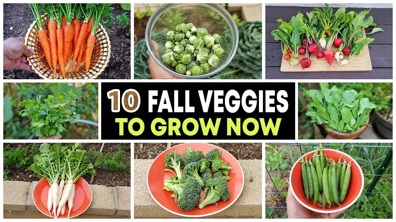 Top 10 Vegetables to grow in Fall & through Winter