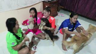 Amazing Beautiful Girl Playing With Dog Smart & Funny Dog# 36