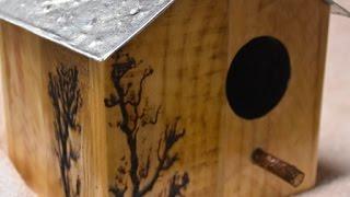 Bird house build - step by step