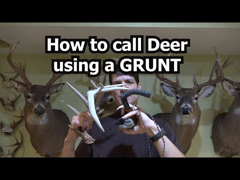 How To Call Deer Using A Grunt Call