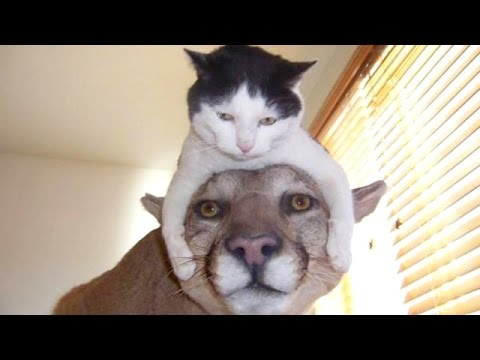 Thumbnail: The funniest and most hilarious ANIMAL videos #1 - Funny animal compilation - Watch & laugh!