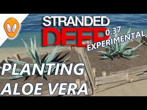 Planting Aloe Vera | Let's Play Stranded Deep 0.37 Experimental Ep3