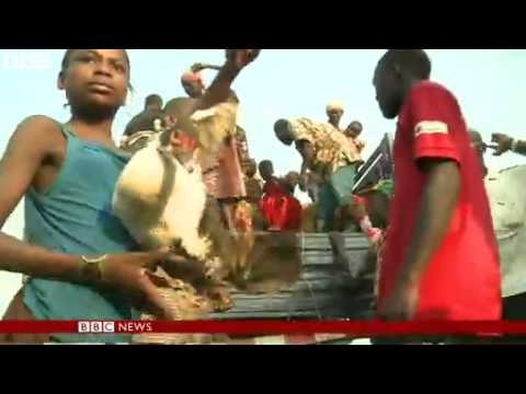 BBC News   DR Congo refugees in Uganda 'rise to 70,000'   Red Cross