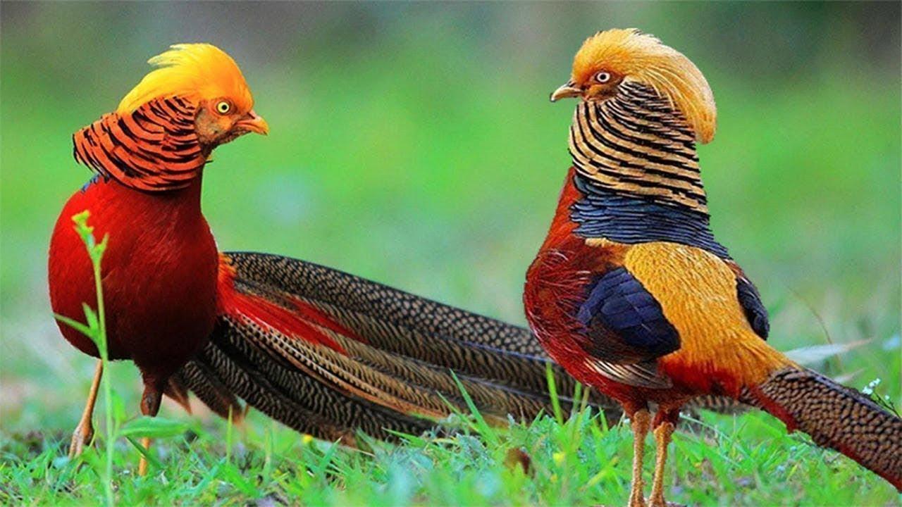 Wildlife Videos Beautiful Animals And Birds Youtube