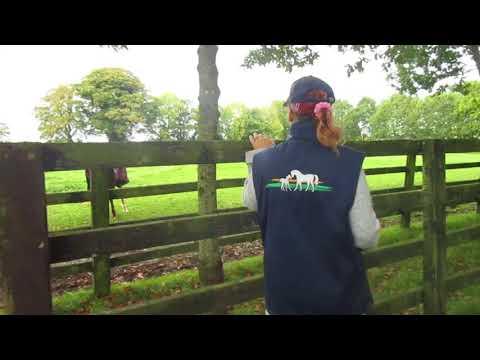The Irish National Stud, Tuesday 10-October-2017, video 5