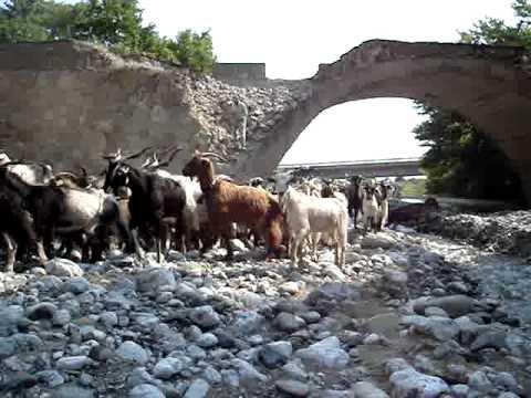 greek herd of goats youtube