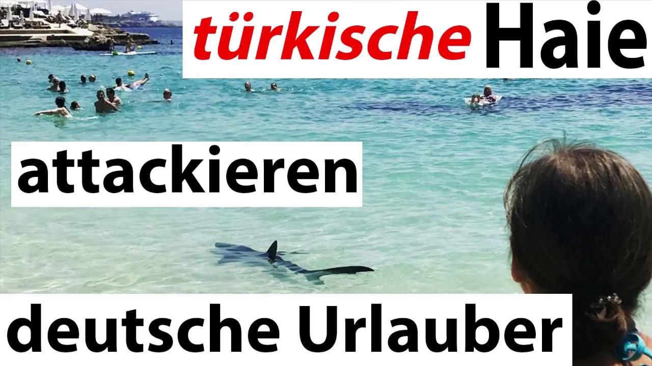 Haie In Der Türkei