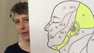 Cranial Nerve 10: The vagus nerve and breathing