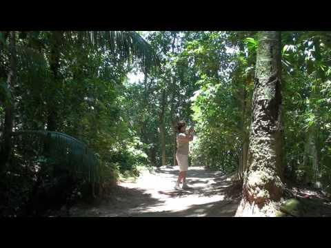 Rio de Janeiro, Botanischer Garten, Botanical Garden   HD