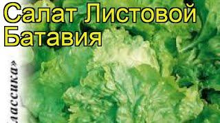 Салат листовой Батавия. Краткий обзор, описание характеристик, где купить семена lactuca sativa