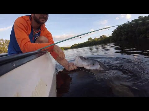 Snook Fishing Tampa Bay- MirrOLure Catch 2000- How To