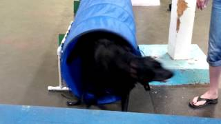 Agility Training With Tunnels - Downtown Dogs Vancouver (604) 435-5505