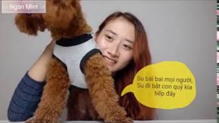 Chia sẻ kinh nghiệm nuôi Poodle- Nuôi Poodle có khó không?