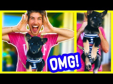 CUTEST PUPPY GADGET EVER!