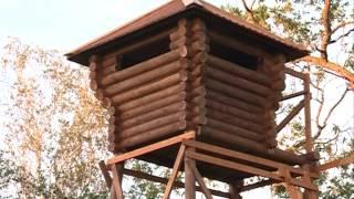 Охота на кабана в Пензенской области видео