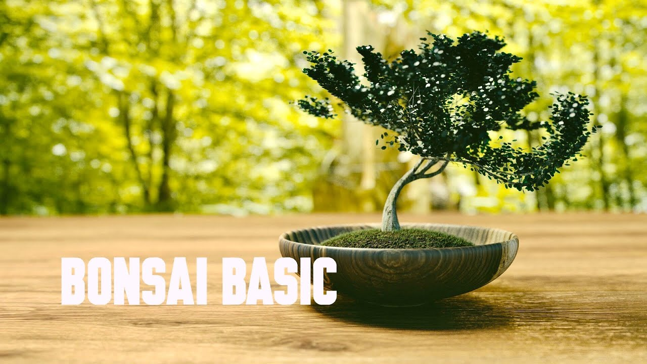 Bonsai – Các thế cơ bản – Bonsai đẹp – Cây cảnh độc lạ – Cây thế đẹp