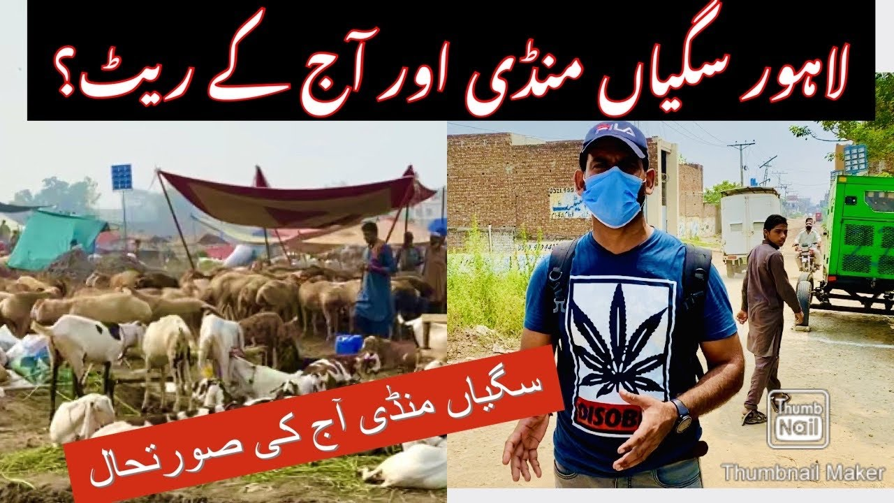 TODAY VISIT SAGIAN MANDI LAHORE PAKISTAN 2020 | CATTLE FARM | EID UL ADHA | ALL IN ONE | ABID DOGAR