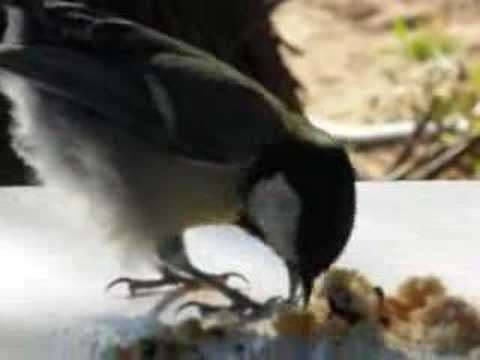 Bird's breakfast in Finikounda Greece