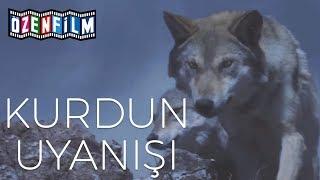 Kurdun Uyanışı (Wolf Totem) - Fragman