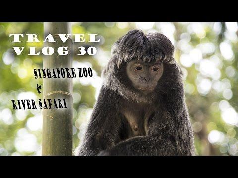 Travel VLOG 30 - Singapore Zoo and River Safari
