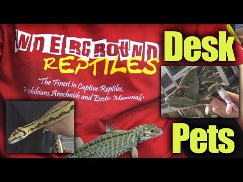 20MU - Desk Pets and Huge Tegus