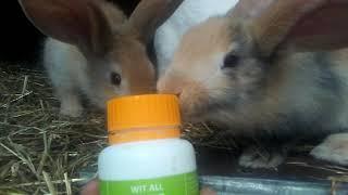 Witaminy dla królików (KONKURS OPIS)