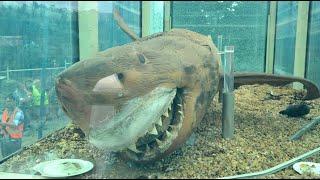 废弃10年的动物园里,居然发现一条超大鲨鱼,这到底是怎么回事?