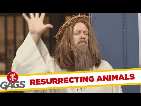 Jesus Brings Animals to Life