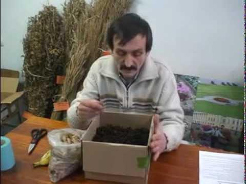 Разведение червя Старатель. Изготовление биогумуса.