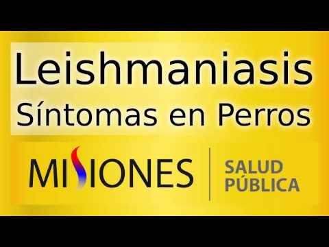 Leishmaniasis  - Síntomas en Perros - Spot de Radio