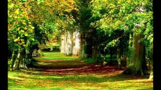 Скачать ЗВУКИ ДОЖДЯ ПЕНИЕ ПТИЦ ЗВУКИ ПРИРОДЫ The Sound Of Rain Birds Singing Sounds Of Nature