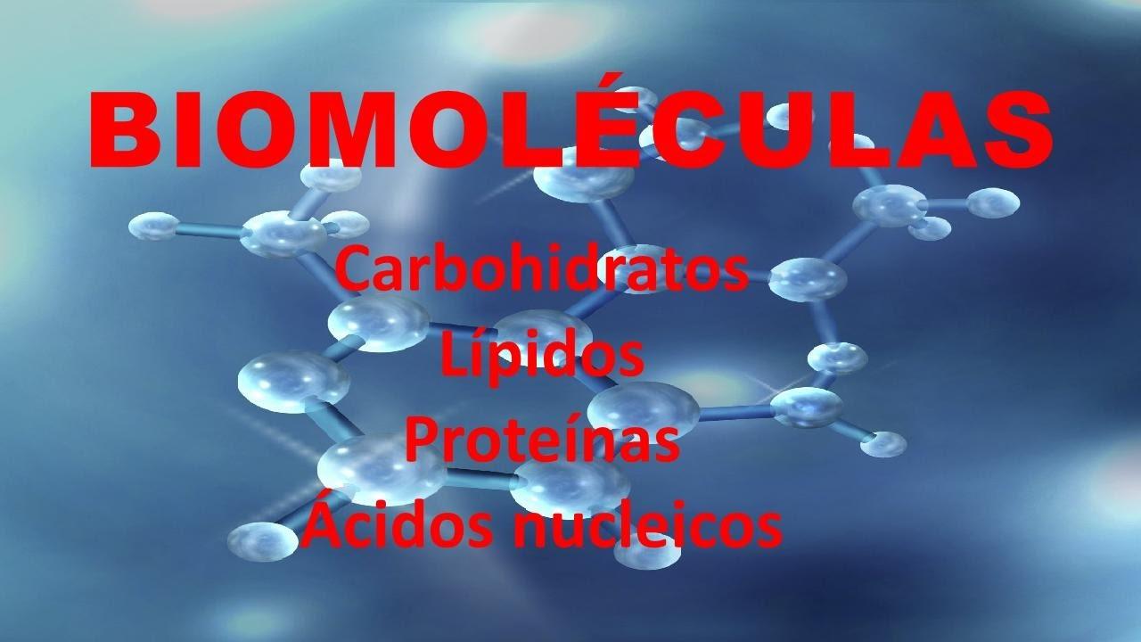biomoleculas organicas amino acidos para adelgazar