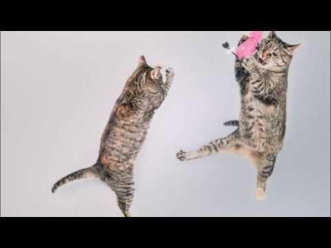 Вопрос: Где живут самые счастливые кошки планеты?