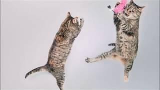 Как сделать кота счастливым Смешные кошки  How to make a cat happy