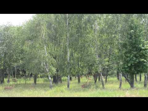 A huge Zoo garden in Mogilev (Republic of Belarus)