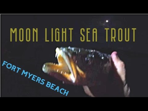 Fort Myers Beach Spotted Sea Trout Fishing Spots