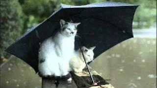 吉野紗香「雨の香り」.flv 吉野紗香 動画 8